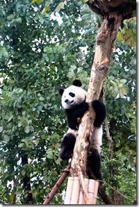 Day 70- Chengdu to Leshan. (5 of 30)